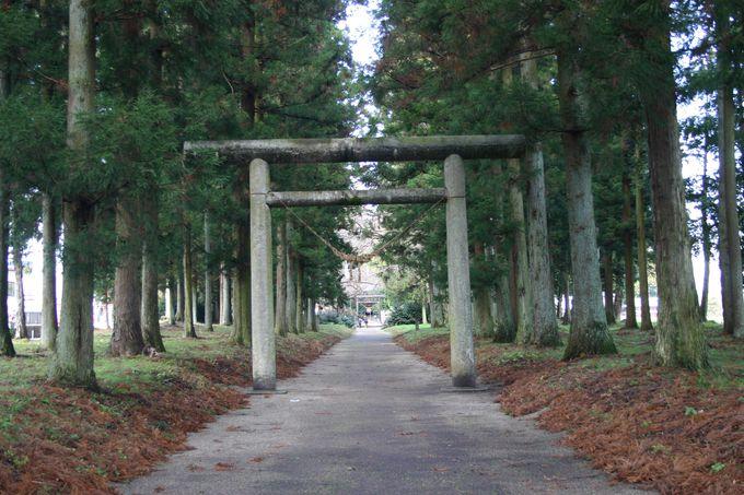 歴史ある木々が立ち並ぶ!長〜い参道