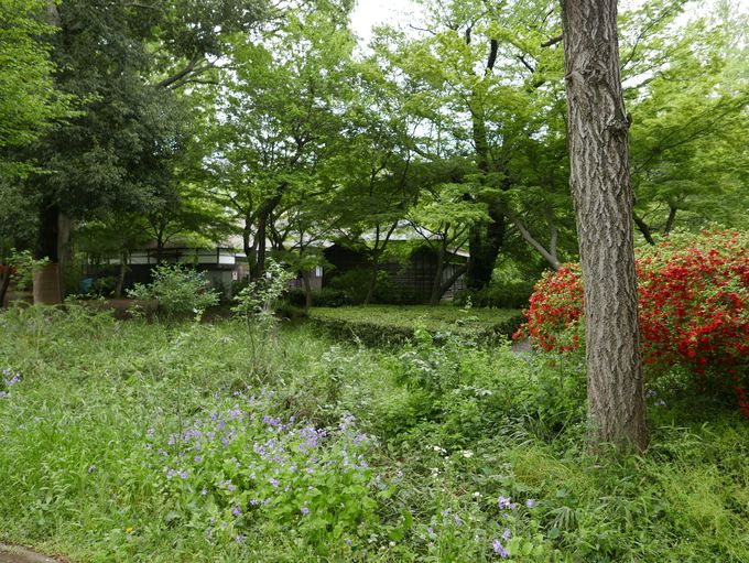 下村湖人と『次郎物語』