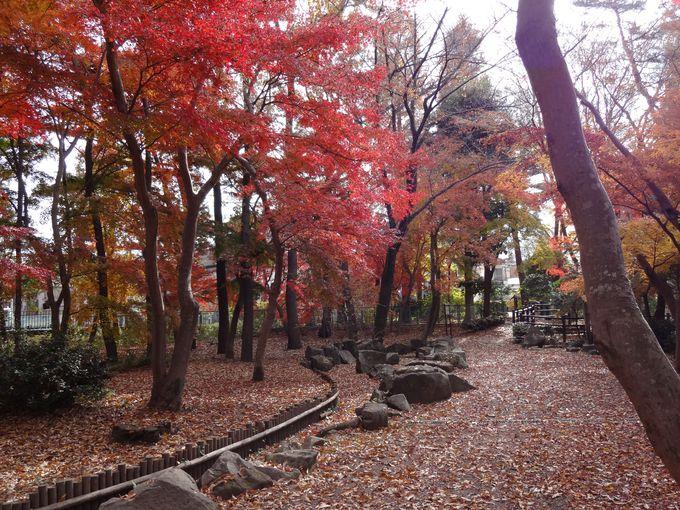 自然がいっぱい、美しい四季が楽しめる浴恩館公園
