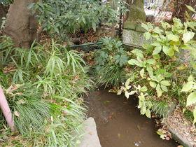 文化も自然も美食も!東京・小金井「はけの森美術館」を散策する