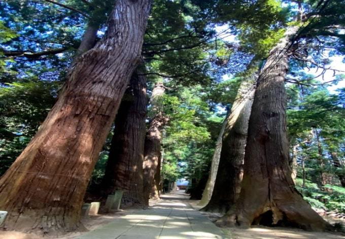 パワースポット日吉神社の杉並木