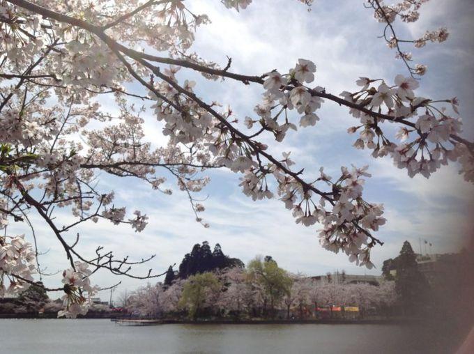 家康も愛でた八鶴湖と桜