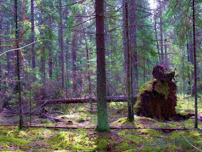 あるがままの森の姿を保存する