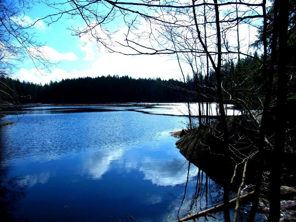 森と湖のおりなす癒しの世界