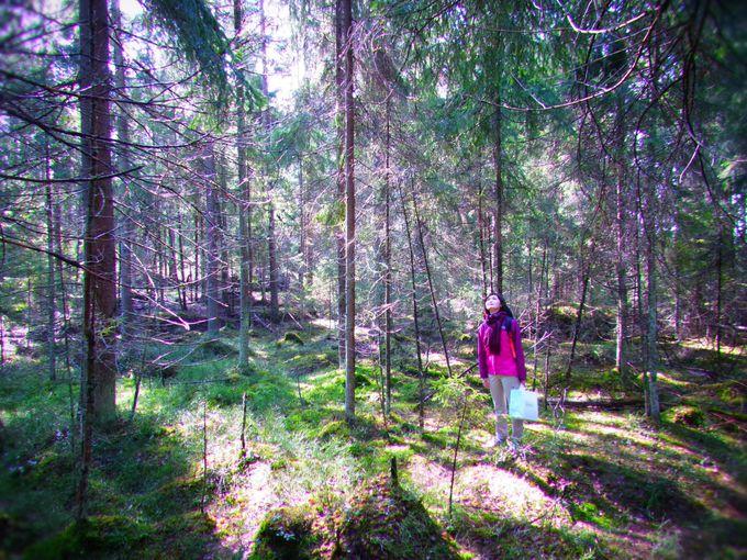 ヘルシンキから日帰りで本格的な森へ