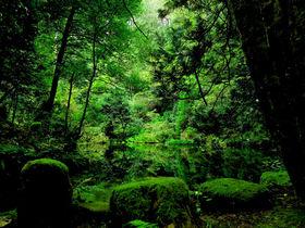 もっと知りたい石川県!金沢・加賀・能登をいいとこ取り