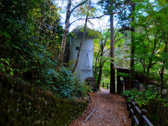 東京都で唯一「日本の滝百選」の名滝へ