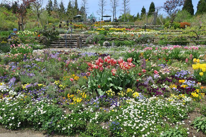 ゲートを入ると、色とりどりの花たちがお出迎え