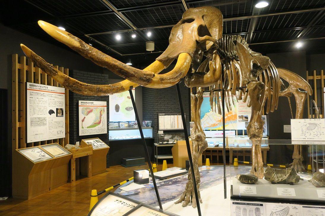 ナウマンゾウがお出迎え!きしわだ自然資料館