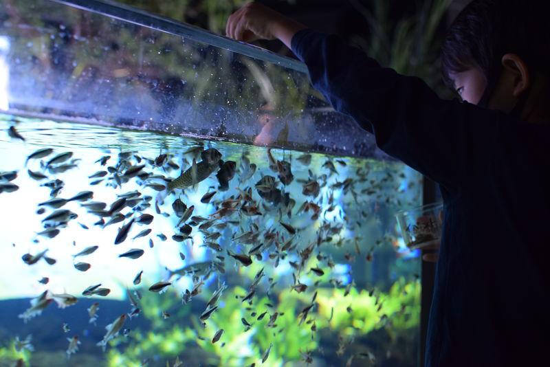 「カワスイ 川崎水族館」はギョギョっと最先端な駅前都市型水族館