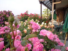 東京で英国気分!国分寺「イングリッシュガーデン・ローズカフェ」でバラに囲まれた優雅な時間