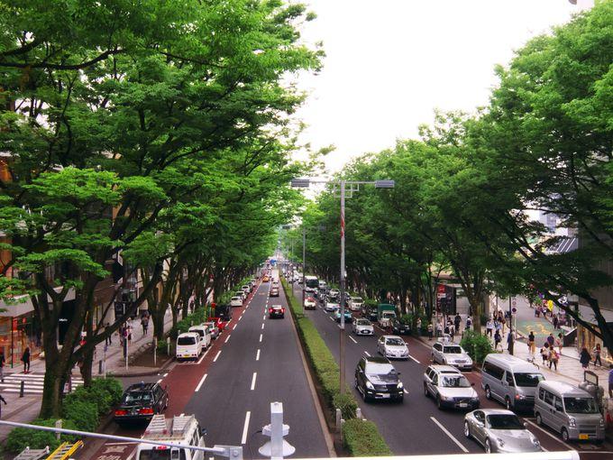 「表参道」の元々の意味は「明治神宮への参道」