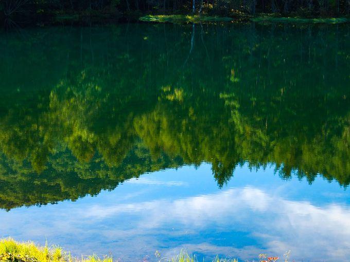 東山魁夷の《緑響く》にも描かれている、鏡のような水面