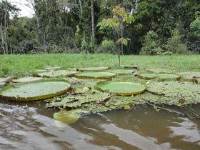 """アマゾンの大自然が目の前に!""""アマゾン観光の拠点""""ブラジル・マナウスでジャングル体験を満喫!"""