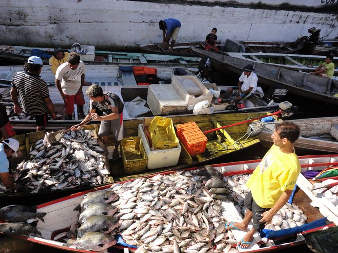 見慣れない川魚がたくさん!マナウスの魚市場へ