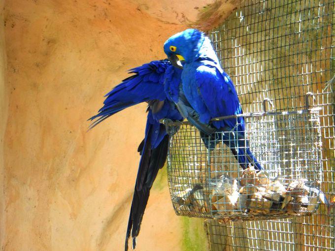 まだまだいる!鳥公園の珍しい鳥の数々!