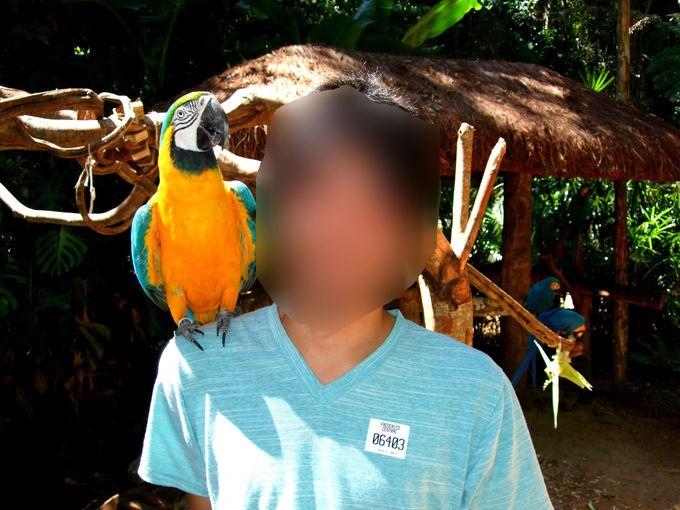 鳥公園で、一生忘れられない思い出の写真を撮ろう!