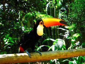 こんな鳥たちと一緒に「はいっチーズ!」ブラジル「鳥公園」は南米の大自然と触れあえる楽園!