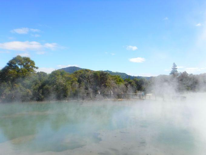 NZロトルアをお得に観光しよう!「クイラウ・パーク」