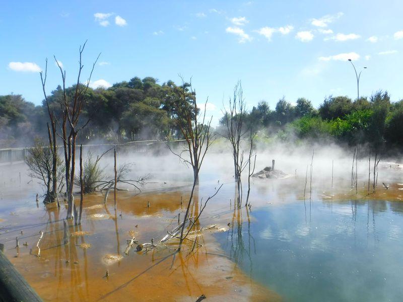 NZ温泉観光地ロトルアの隠れた名所「クイラウ・パーク」がすごい!