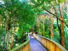 ニュージーランドの大自然をコンパクトに満喫!ファンガレイの自然スポット5選