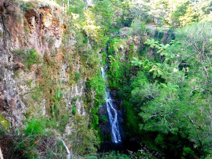ニュージーランドの大自然の中をウォーキング!「AHリード公園」