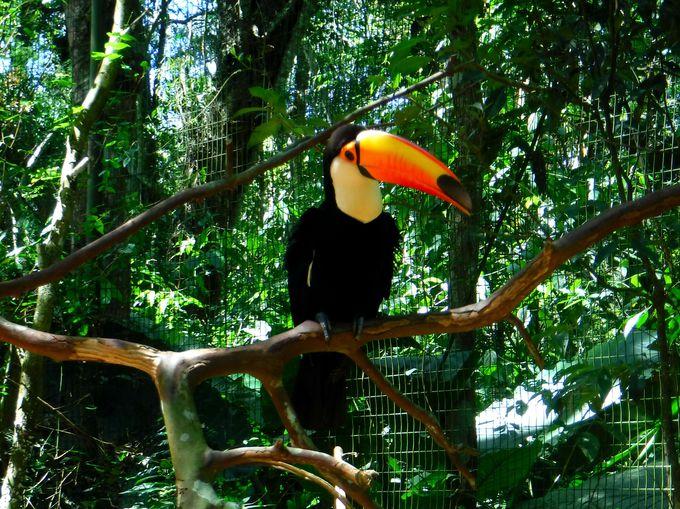 8時半:鳥公園で珍しい鳥たちと触れ合おう!