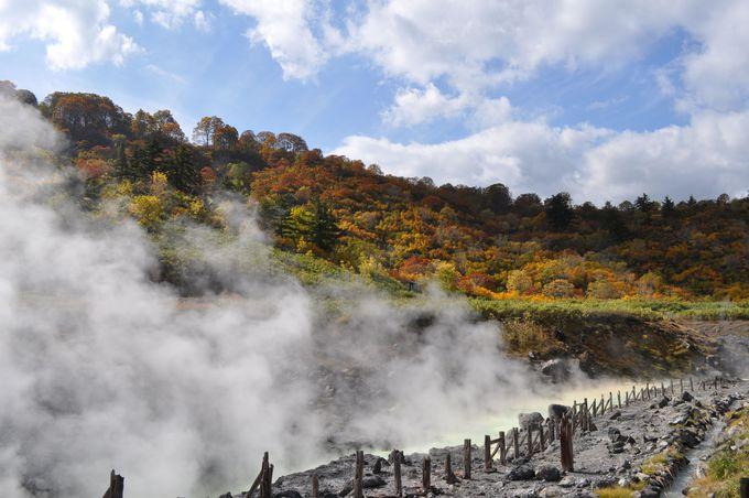 秋田・美しの紅葉と効能溢れる癒しの湯治宿「玉川温泉」と施設が充実した「新玉川温泉」