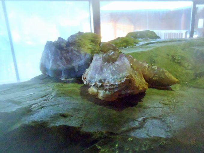 内湯に大きな水晶キラリ