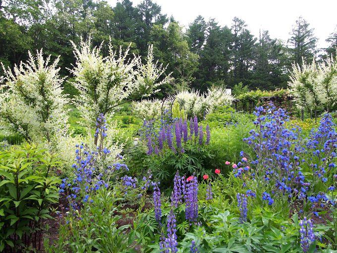 美しすぎる花々が見事なまでに咲き乱れる英国式の「風のガーデン」
