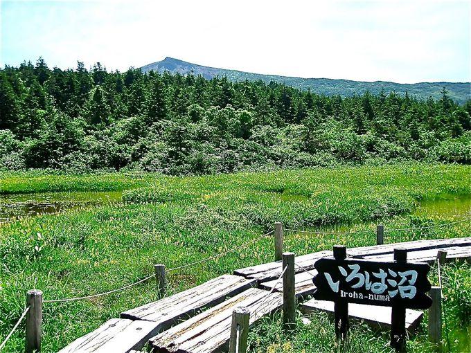 美しい景色が楽しめる「いろは沼」でちょっと寄り道!