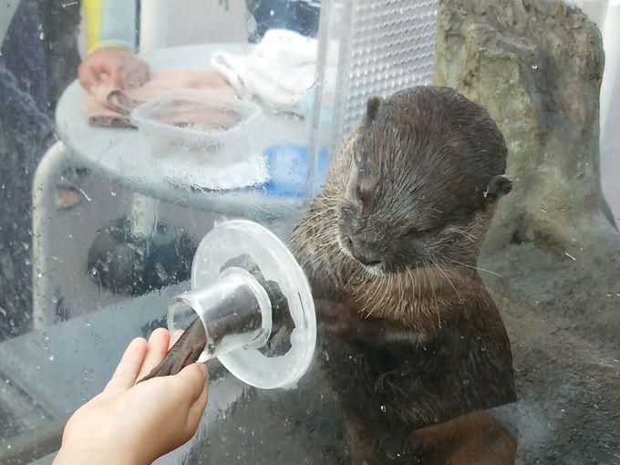 ガイドプログラムで、キュートなイルカやコツメカワウソと握手!