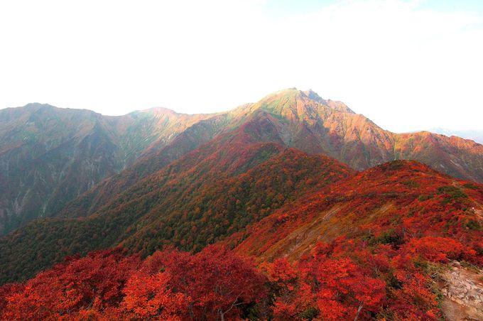 息をのむ大パノラマ、山を下りてくる紅葉