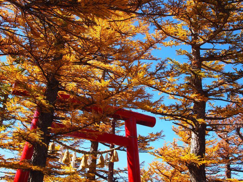 富士山の原点!?五合目「冨士山小御嶽神社」からの眺望は頂上・裾野のダブル絶景
