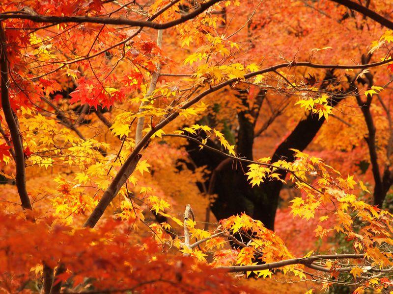 埼玉の紅葉名所「平林寺」は、心癒される自然と歴史の散歩道