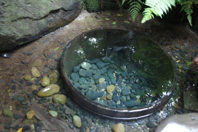 菖蒲田を潤す、「清正井」の清らかな水