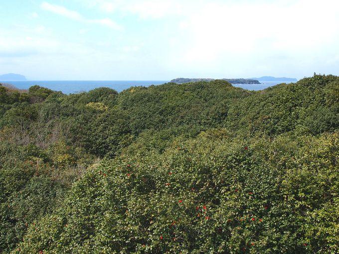 「笠山椿群生林」の成り立ちと楽しみ方