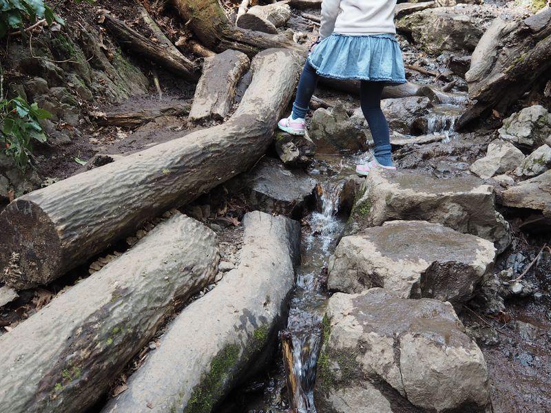 子供の登山デビューにも!高尾山自然研究路6号路の魅力