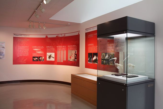 「トキ資料展示館」で、トキについて学ぶ