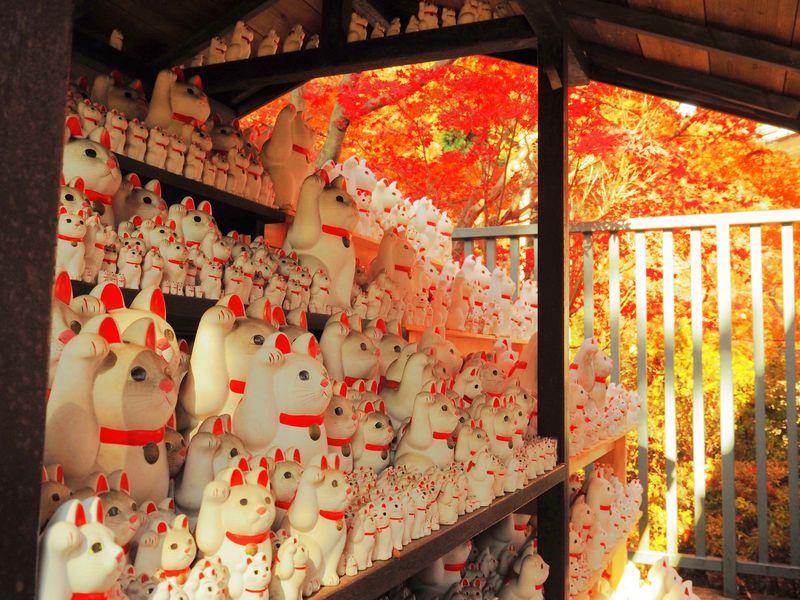 招き猫たちと紅葉を愛でる秋!東京・井伊家菩提寺「豪徳寺」