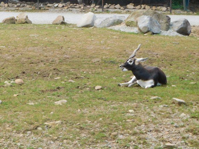 那須サファリパークで出会える珍しい動物たち