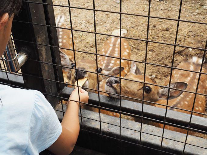 人なつっこい動物たちに癒される草食動物エリア