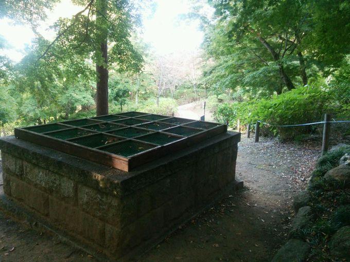 日本三名井の一つ「日影の井戸」