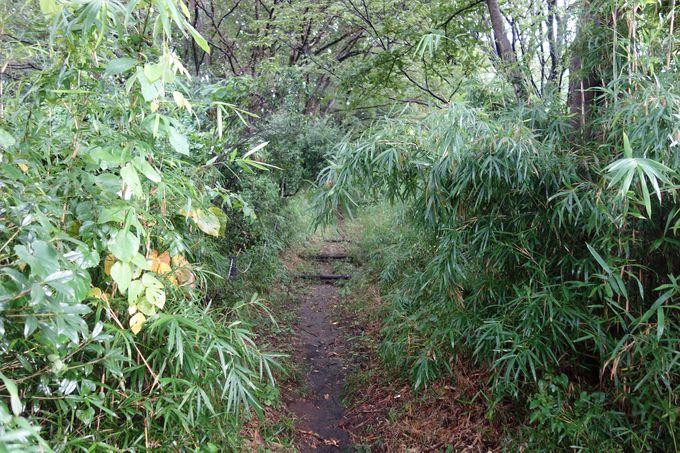 茂みの中をかき分けて、ようやく本丸への登城道に到達