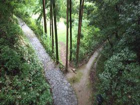 山中に埋れた城跡!八王子の続百名城「滝山城」は都心から1時間