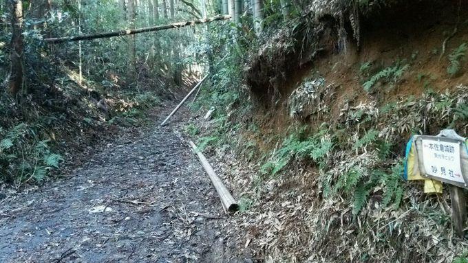 搦め手口からは、竹藪を縫うように倒木を跨いで!