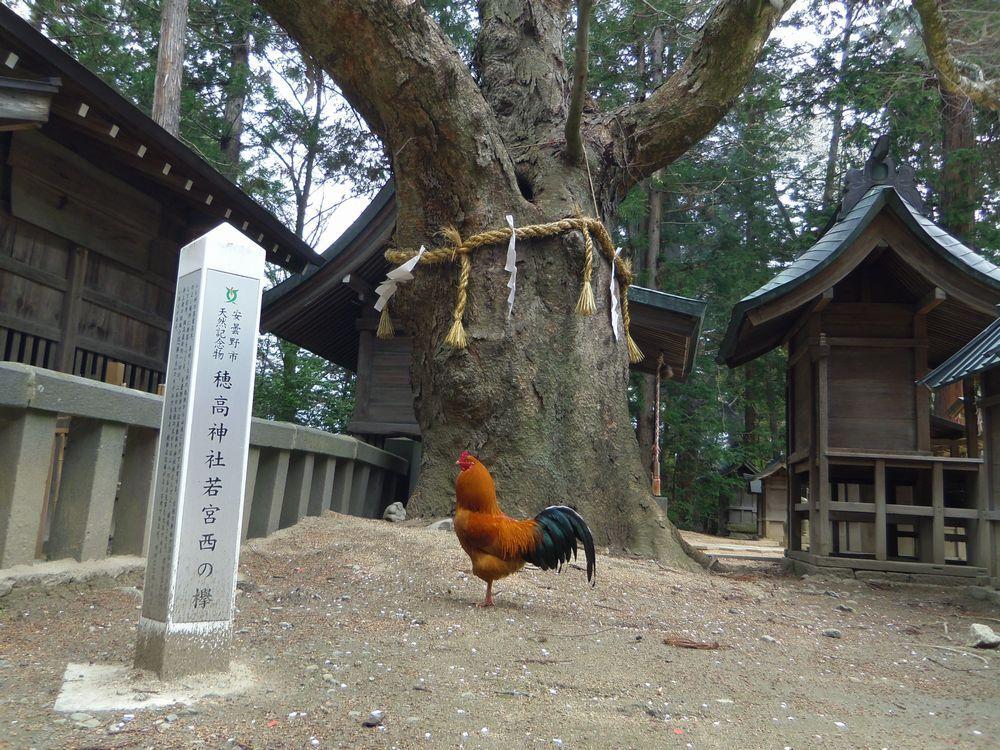 樹齢500年以上!古木の存在感に圧倒
