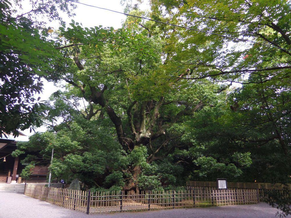 6.浜松八幡宮