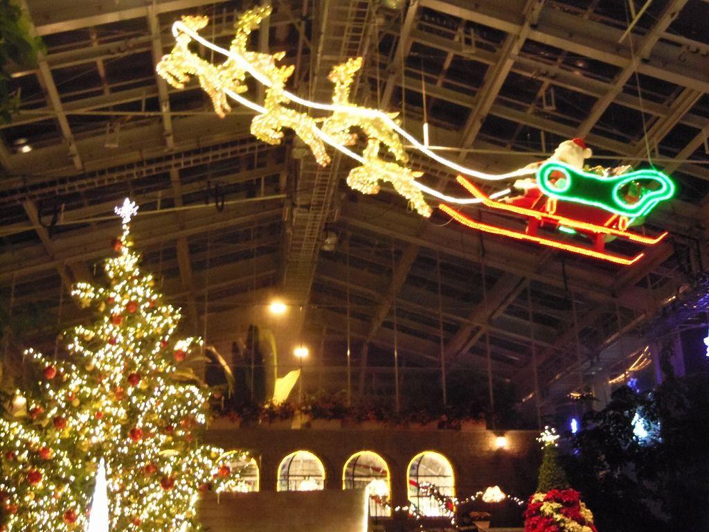 大温室内はクリスマス一色。本物のモミの木ツリーに感動