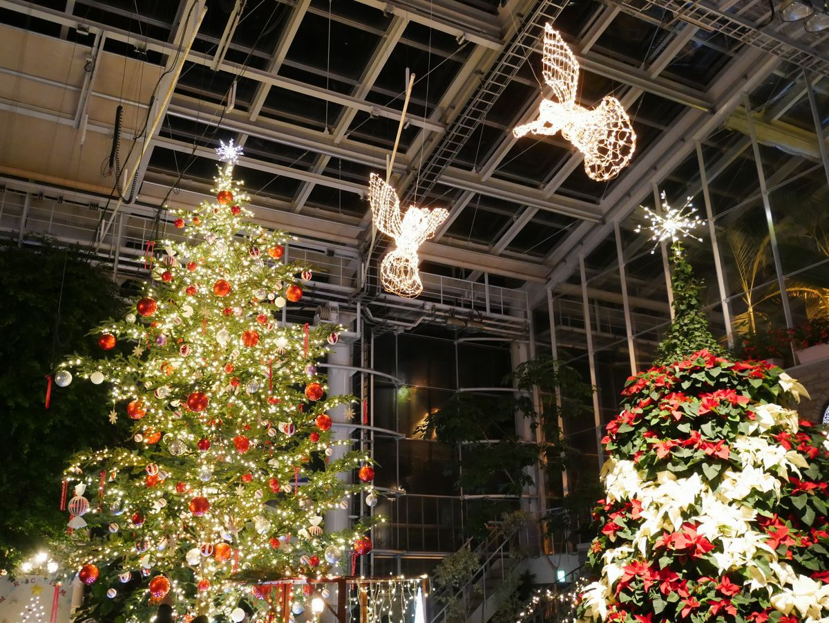 大温室はクリスマス一色!